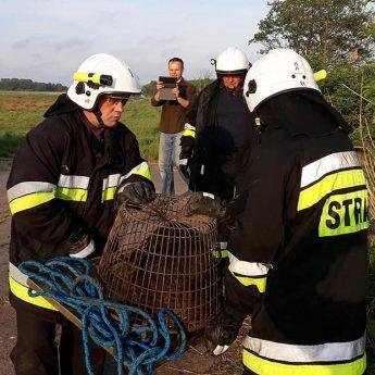 Strażacy ze Stuchowa uratowali bobra!