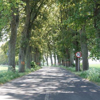 Wycinka drzew przy trasie Unin - Wolin wstrzymana