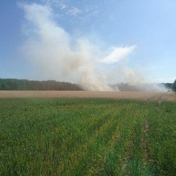 Spłonęły trzy hektary zboża i nieużytków. Strażacy ratowali las