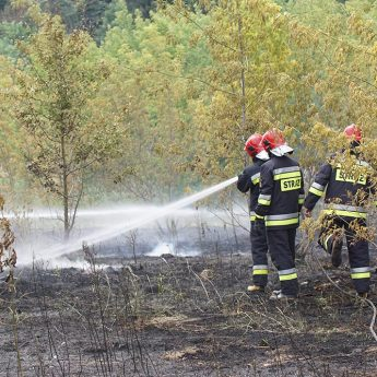 Plaga pożarów nieużytków w regionie
