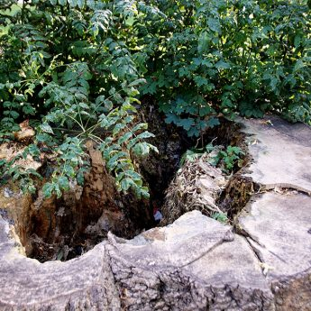 Zwisające niebezpiecznie gałęzie i puste drzewa. Mieszkanka nie chce zmian w wyglądzie parku