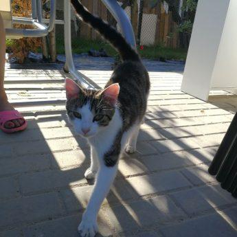 Kotek szuka nowego domu!