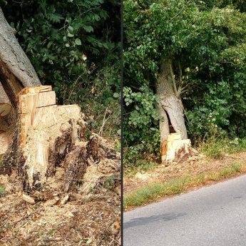 """Czytelniczka o """"dobrej kondycji"""" drzew przy drodze Recław - Laska"""