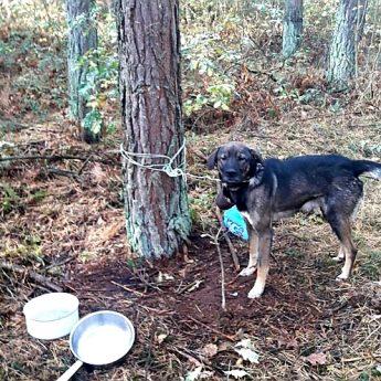 Bez wody i picia przywiązany do drzewa! Pomóżmy policji znaleźć bestię która zostawiła psa!