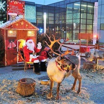 Prawdziwe renifery i święty Mikołaj w piątek i sobotę!