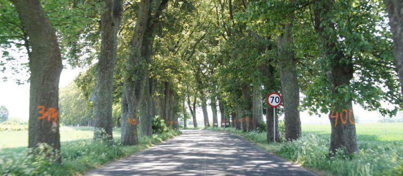 Będzie zgoda na wycinkę drzew na trasie Unin - Wolin? Ministerstwo uchyla decyzję Konserwatora Zabytków