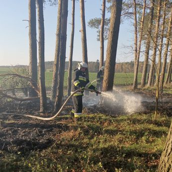 Kolejny pożar lasu. Tym razem ktoś podpalił poszycie w Kępicy