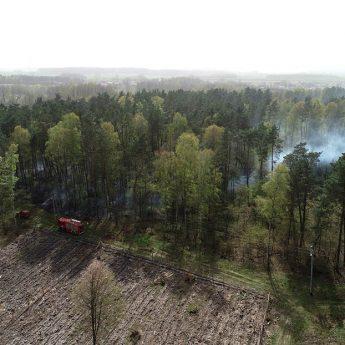 Regionalna Dyrekcja Lasów Państwowych ostrzega!