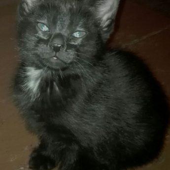 Oddam koteczkę !!!