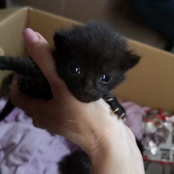 Szukamy domków dla kocich dzieci!