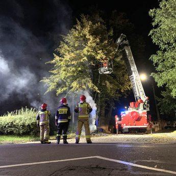 Ktoś podpalił jedno z drzew przy kamieńskiej katedrze