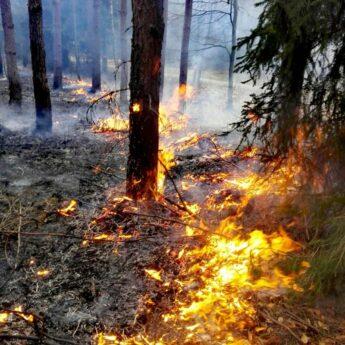 Bezpośrednia ochrona przeciwpożarowa na terenie Lasów Państwowych