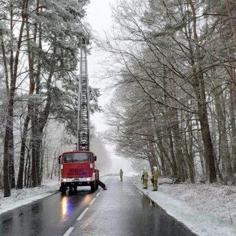 Zwisające konary, przewrócone drzewa. Pracowite święta strażaków z Kołczewa