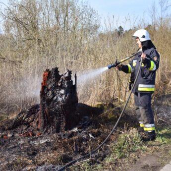 Podpalenie przyczyną pożaru nieużytków i szkółki leśnej