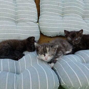 Oddam 2 małe kotki dowóz gratis