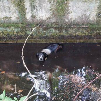 Strażacy z Kołczewa uratowali psa